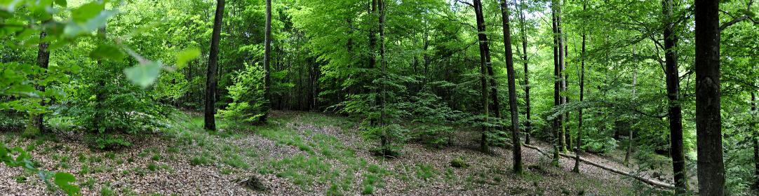 La clairière, symbole du nouveau blog Terra Morchellarum