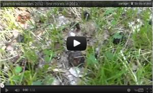 Youtube - Premières morilles 2012