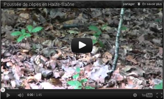 Vidéo de cèpes