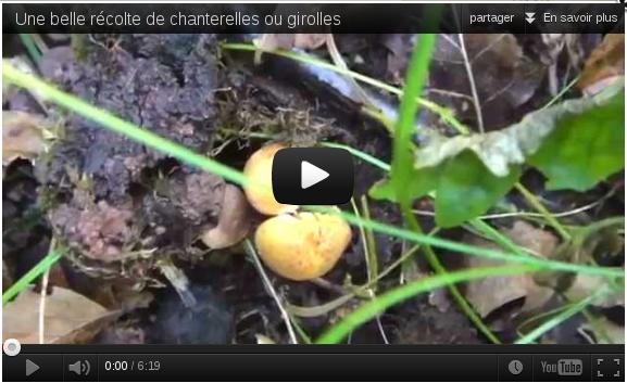 Youtube, récolte de chanterelles.