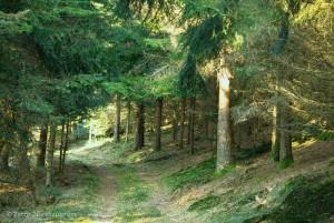 Randonnée dans les Vosges saônoises.