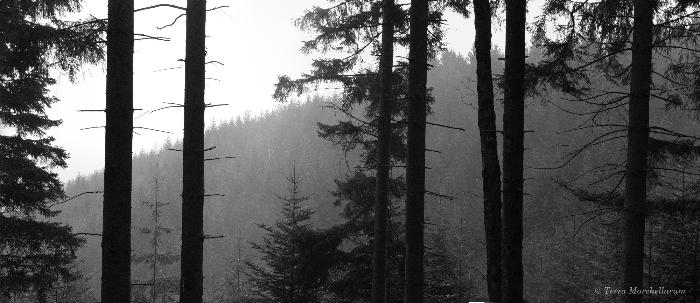 Panorama en Noir & Blanc de la zone de prospection dans les Vosges Saônoises entre 600 et 700 m d'altitude environ.
