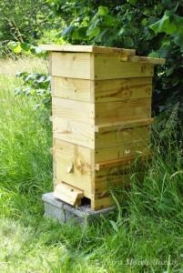 Une ruche Warré dans le jardin, une ruche assez simple à conduire, qui permet d'avoir des abeilles calmes et très peu agressives.