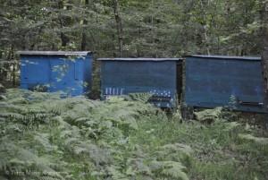 le plaisir d'observer des ruches en pleine forêt.