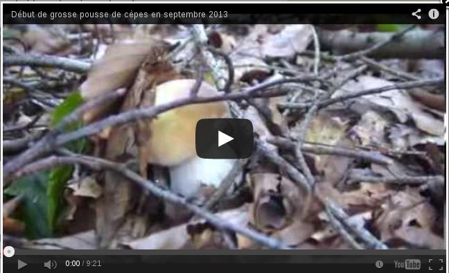 Youtube, début de pousse de cèpes.
