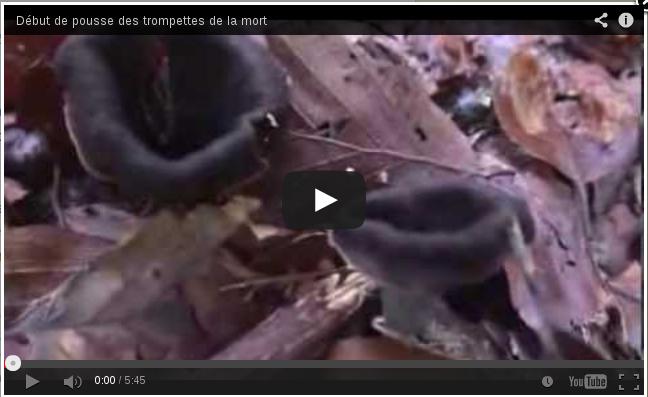 Youtube, début de pousse des trompettes de la mort