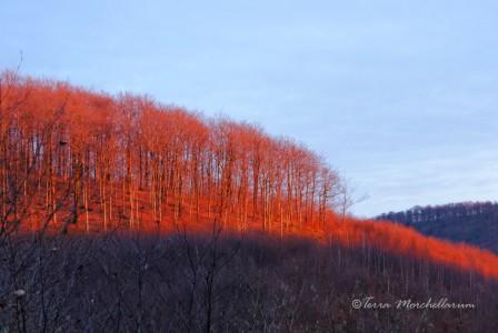 La forêt éclairée par le soleil couchant de janvier.