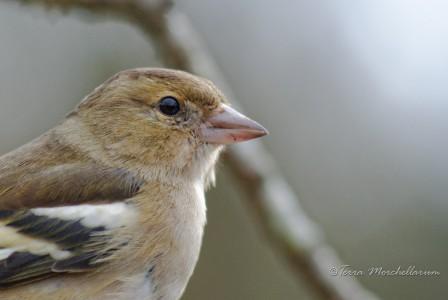 Les oiseaux cherchent à nicher et sont très actifs comme ce pinson.