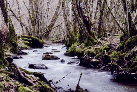 Un joli secteur en apparence le long d'un ruisseau mais qui se révèle particulièrement acide.