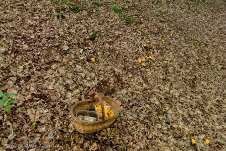Trop tard, j'ai déjà mon quota de champignon !