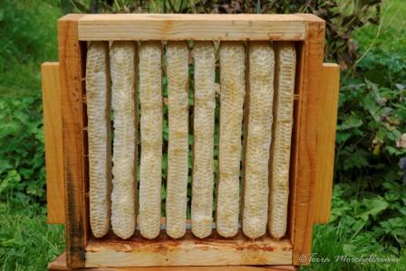 Construction des rayons de cire par les abeilles d'une demi-hausse à miel.