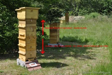 Plus tard, la ruche s'est développée, elle est mise en production.