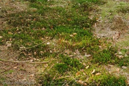 Tapis de mousse bien vert cette année.