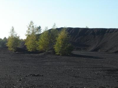 Bien connaître le terrain et le climat de sa zone de prospection de morilles. Partie 1