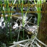 8500 lecteurs sur Terra Morchellarum !