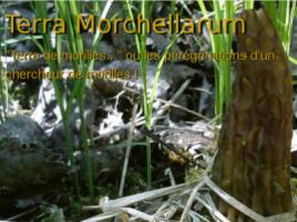 Terra Morchellarum ancienne version