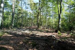 Coupes de bois en cours : sol tassé, arbres abîmés et branches jonchant le sol.