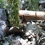 Morilles : petit bilan climatique