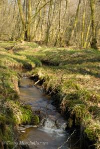 Le ruisseau coule tranquillement, l'herbe pousse à peine.