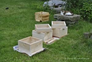 Construction des premiers éléments de ruche au format Warré.
