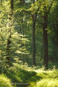 Une belle forêt de plaine sous le soleil d'été