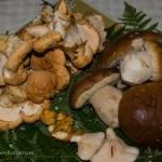 Cueillette des champignons : c'est parti !