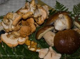 Première cueillette à l'automne 2013 : cèpes de Bordeaux - Boletus edulis et pieds de mouton - Hydnum repandum.