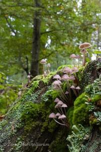 Une colonie de champignons esthétiques