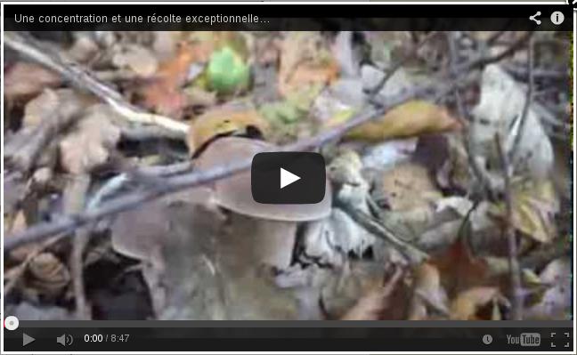 Youtube, concentration de cèpes.