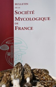 Le travail de Philippe Clowez permet d'appréhender l'écologie des morilles et de réaliser de jolies cueillettes. Une façon d'allier nourriture spirituelle et plaisir culinaire !