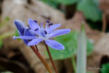 Les premières balades à la découverte des jolies fleurs printanières.