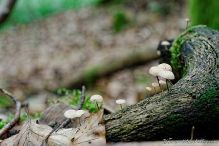 Une photo de champignon pour le plaisir.