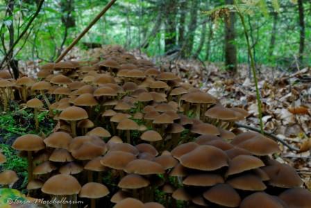 Une belle forêt de champignons !