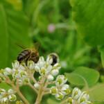 Produire son propre miel