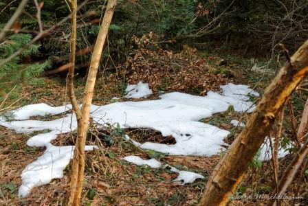 De nombreuses plaques de neige même à basse altitude.