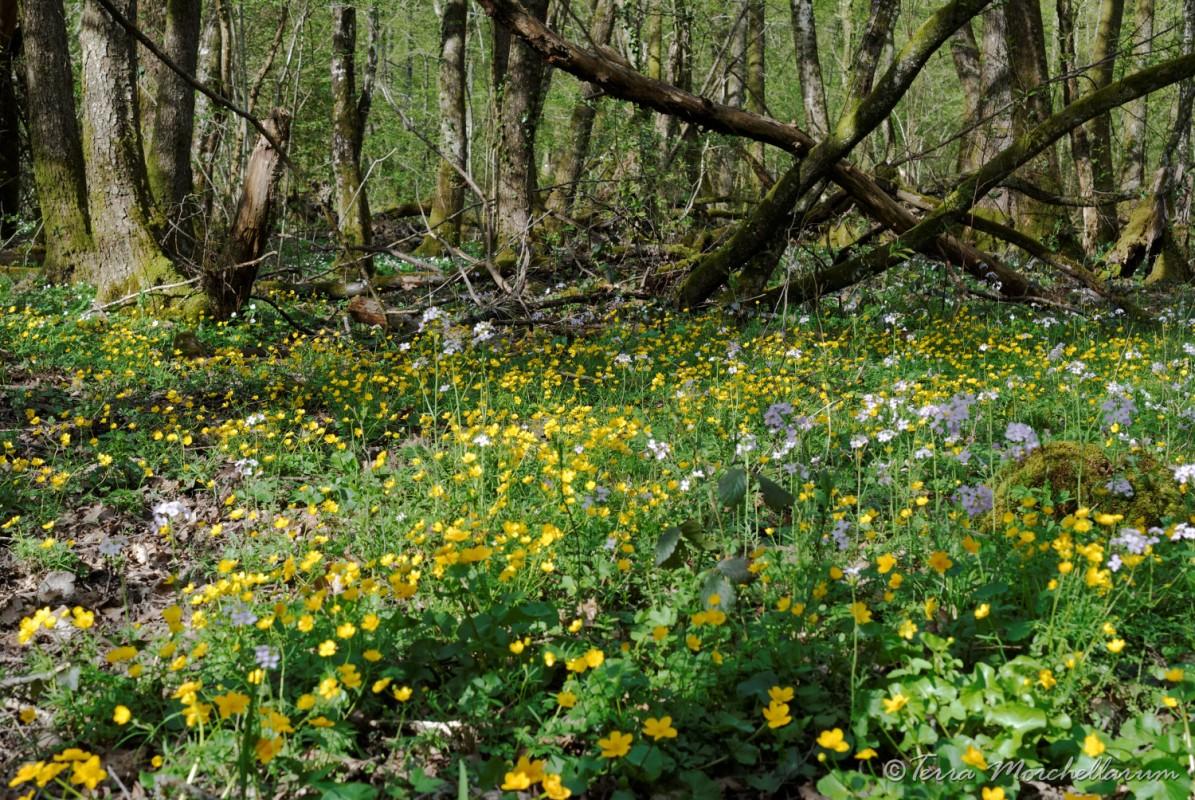 Un joli sous-bois fleuri