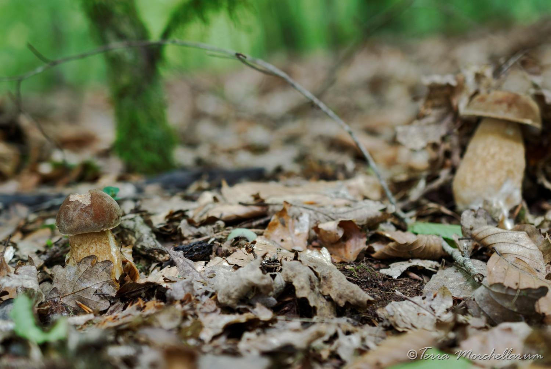 Les champignons d'été sont là !