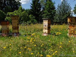 Une partie du rucher
