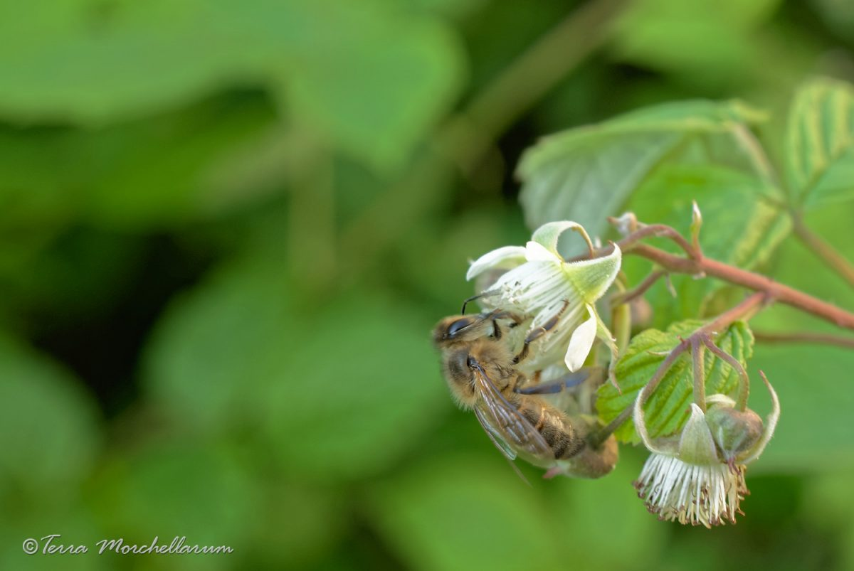 Psssit ! le calendrier 2019 des stages d'apiculture naturelle est là !