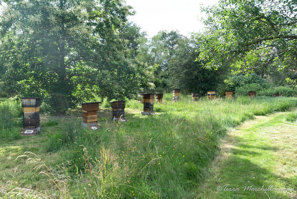 Vue ouest du rucher : prairie naturelle et verger.