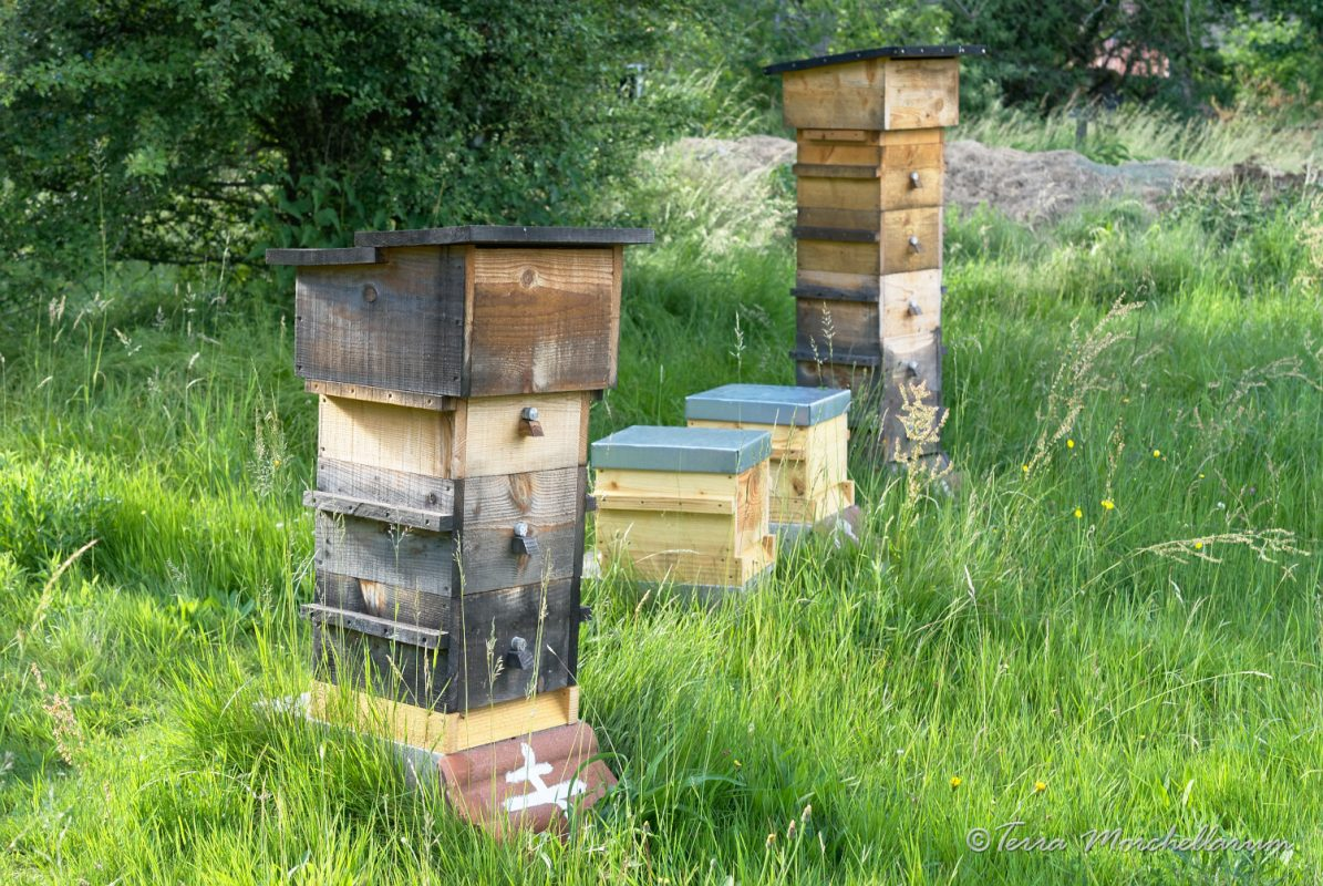 Au premier plan, la ruche où le pseudoscorpion a été observé lors d'un stage (ruche 1 pour les comptages).