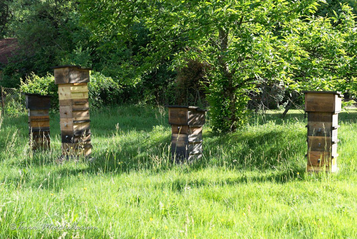 A droite, la ruche 2 et tout à gauche la ruche 3 pour les comptages.